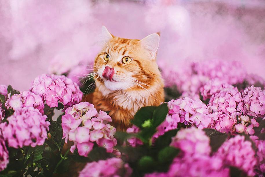 professional-cat-photography-kotleta-cutlet-kristina-makeeva-hobopeeba-18