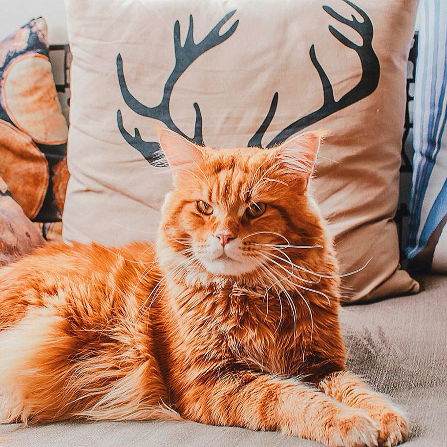 professional-cat-photography-kotleta-cutlet-kristina-makeeva-hobopeeba-21