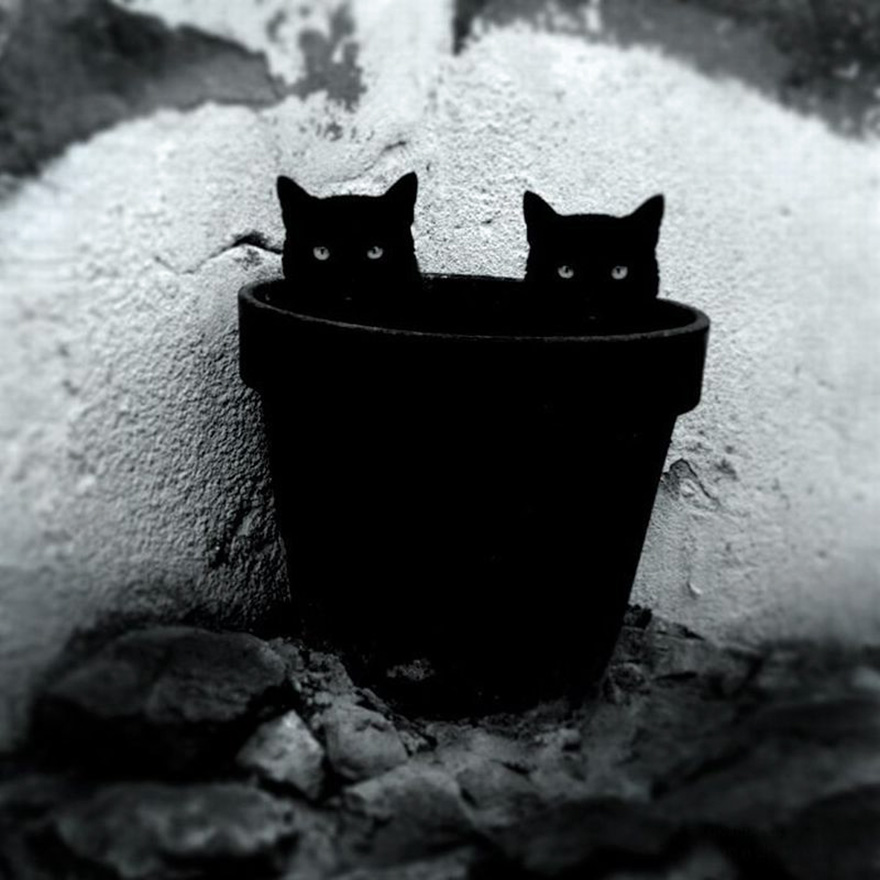 mysterious-cats-black-and-white-portraits-13