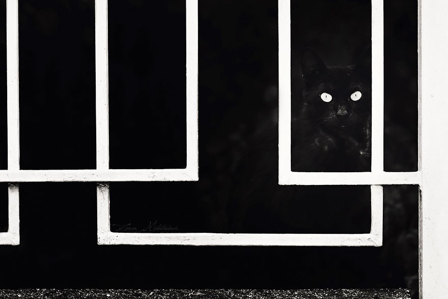 mysterious-cats-black-and-white-portraits-3