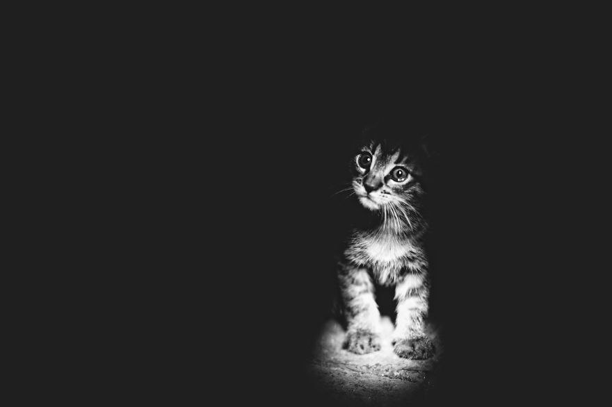 mysterious-cats-black-and-white-portraits-9
