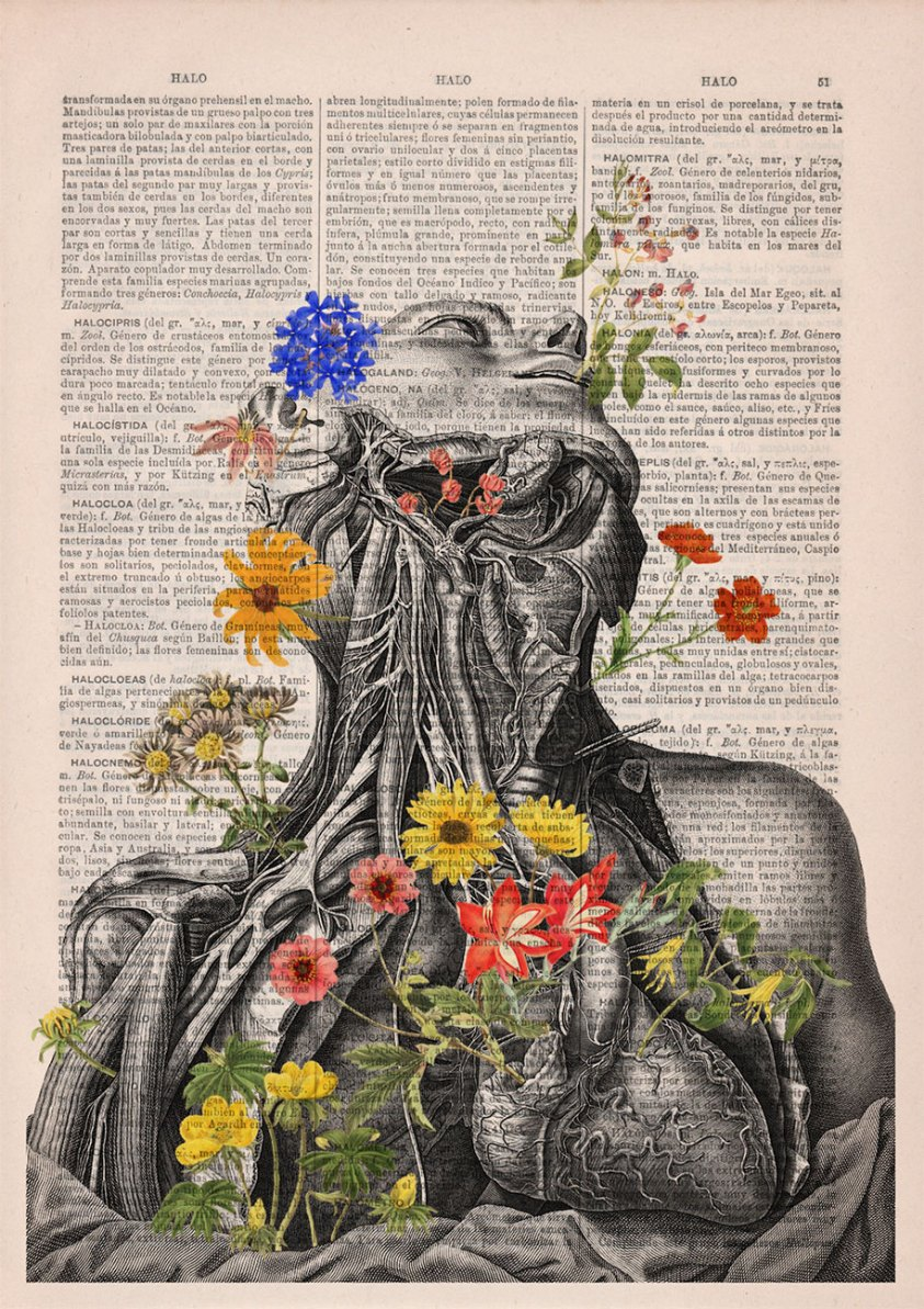 Floral Anatomy Illustrations On The Pages Of Old Books ...