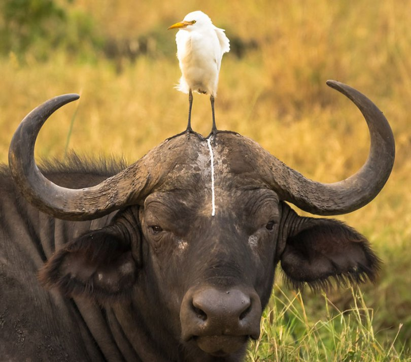 comedy wildlife photography awards best photos 2016 21 - As fotos profissionais mais engraçados do mundo animal (Parte 2)