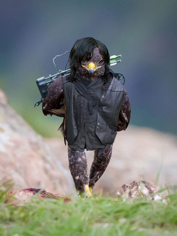 funny-badass-hawk-photoshop-battle-4