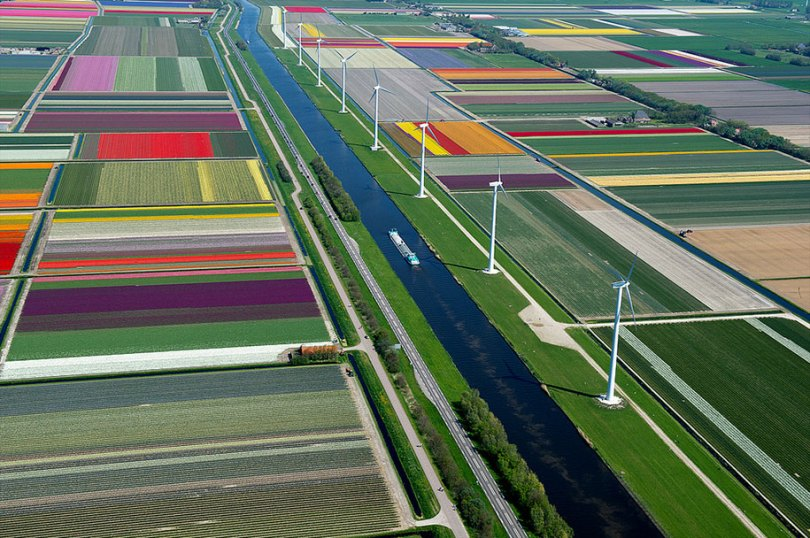 flower fields aerial photography netherlands normann szkop 10 - Show de cores nas fotos aéreas de tulipas holandesas