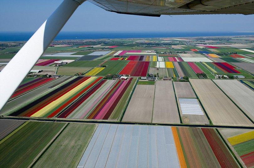 flower fields aerial photography netherlands normann szkop 14 - Show de cores nas fotos aéreas de tulipas holandesas