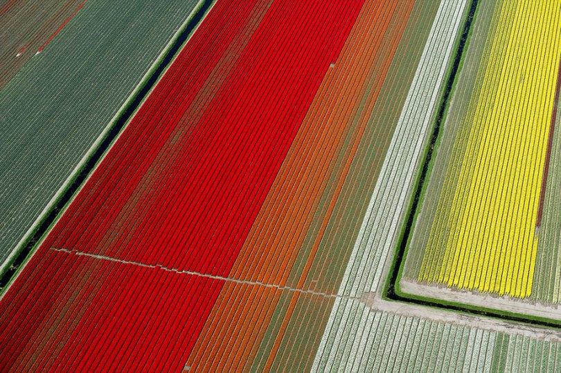 flower fields aerial photography netherlands normann szkop 17 - Show de cores nas fotos aéreas de tulipas holandesas