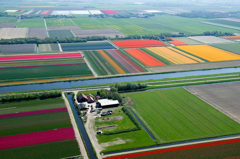 flower fields aerial photography netherlands normann szkop 52 - Show de cores nas fotos aéreas de tulipas holandesas