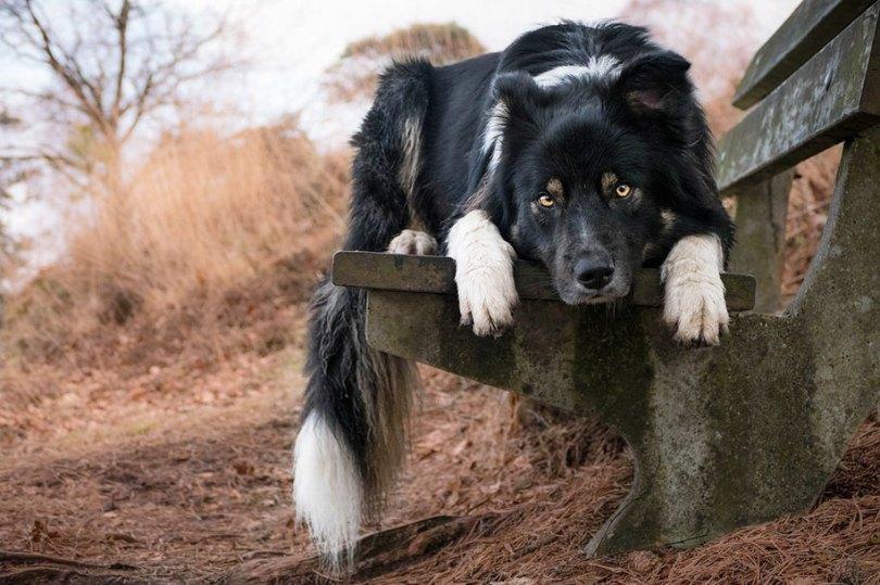 kennel club dog photographer competition 2017 11 - Ganhadores do concurso fotografias de cachorrinhos