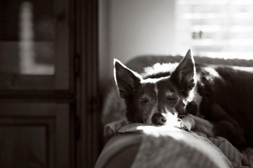kennel club dog photographer competition 2017 7 - Ganhadores do concurso fotografias de cachorrinhos