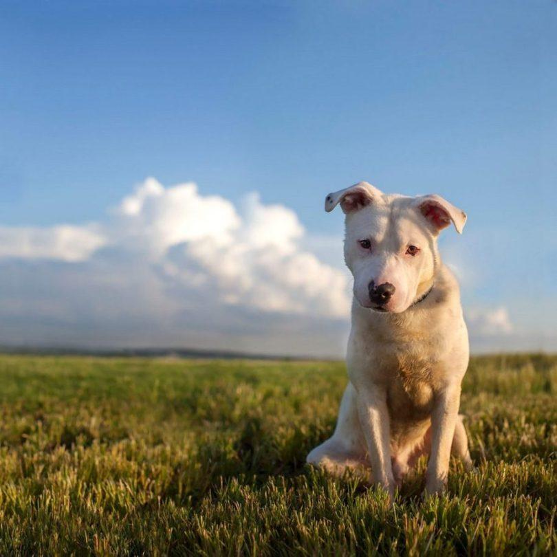 Fotos, Curiosidades, Comunicação, Jornalismo, Marketing, Propaganda, Mídia Interessante 12-2-915x915 Fotógrafa tira fotos de cães abandonados em abrigo Cotidiano Fotos e fatos  cães abandonados