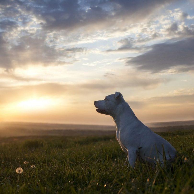 15 2 915x915 - Fotógrafa tira fotos de cães abandonados em abrigo