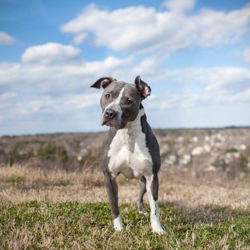 Fotos, Curiosidades, Comunicação, Jornalismo, Marketing, Propaganda, Mídia Interessante 17-915x915 Fotógrafa tira fotos de cães abandonados em abrigo Cotidiano Fotos e fatos  cães abandonados