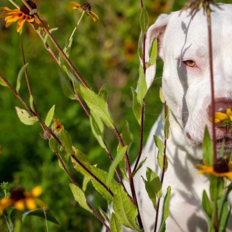18 915x915 - Fotógrafa tira fotos de cães abandonados em abrigo
