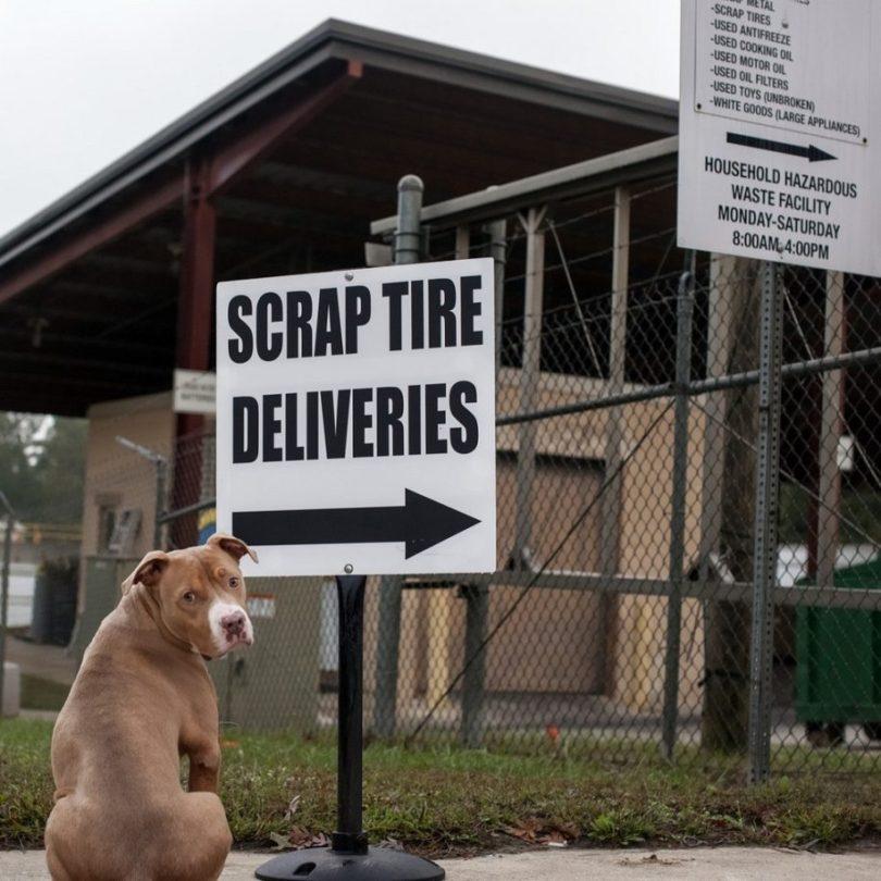 21 915x915 - Fotógrafa tira fotos de cães abandonados em abrigo