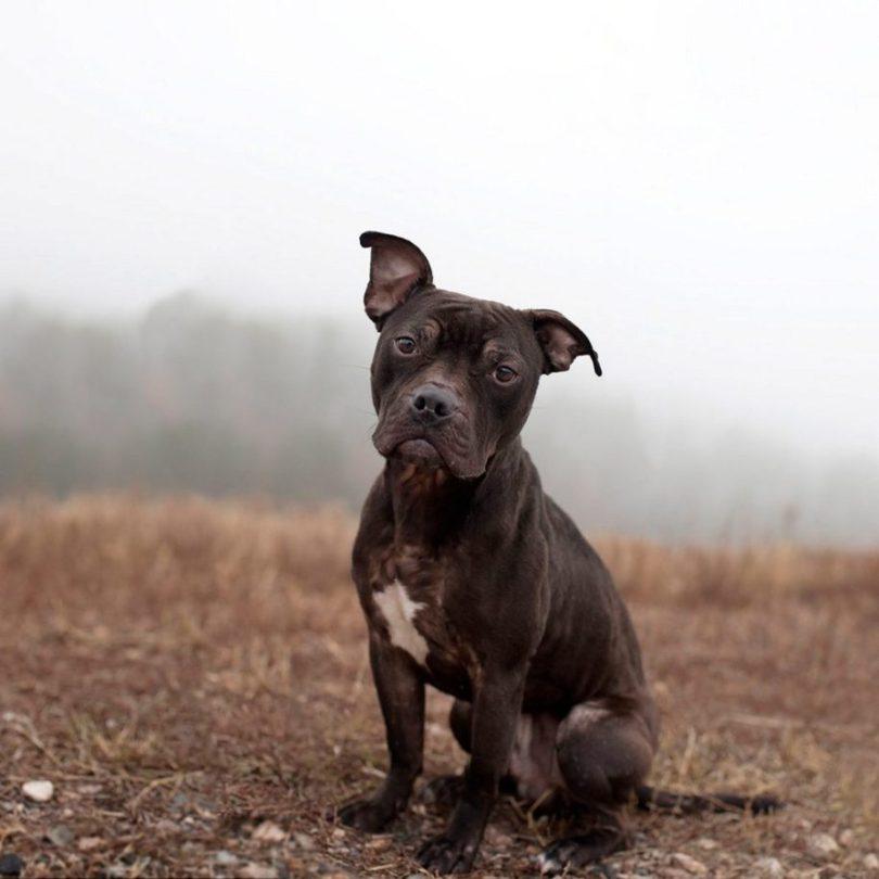 5 2 915x915 - Fotógrafa tira fotos de cães abandonados em abrigo