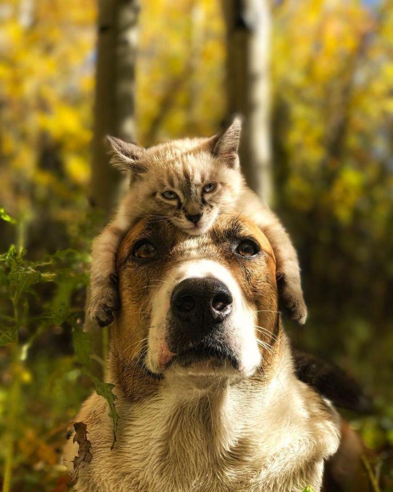 5a1bc7a819b4f 15 5a1845f9bec6c  880 - Como cão e gato - Esses amigos são inseparáveis