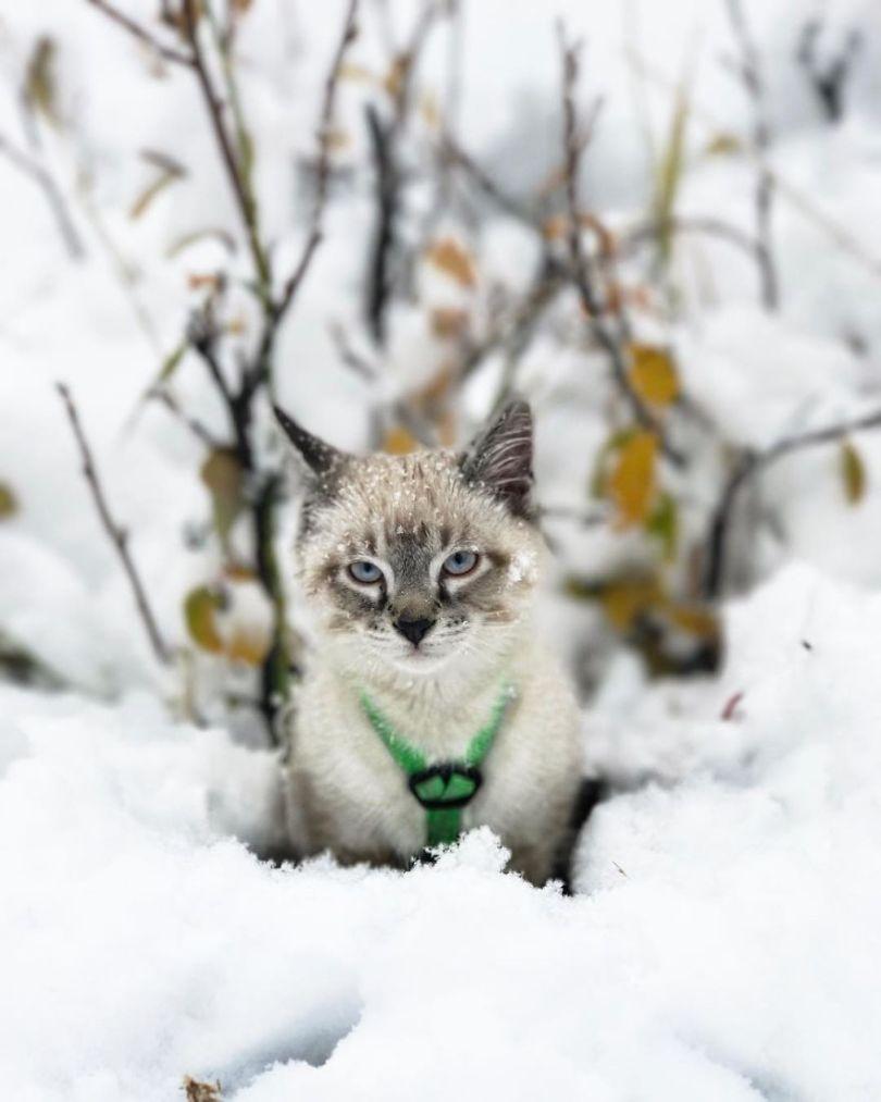 5a1bc7a95a990 21 5a18460446dfa  880 - Como cão e gato - Esses amigos são inseparáveis