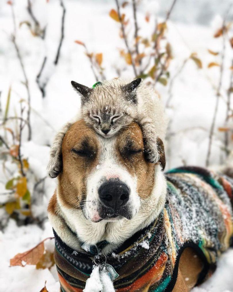 5a1bc7a99a638 14 5a1845f8201a0  880 - Como cão e gato - Esses amigos são inseparáveis