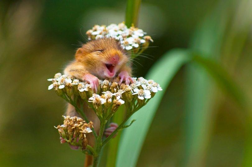 00000221 p - As fotografias profissionais mais engraçadas do mundo animal