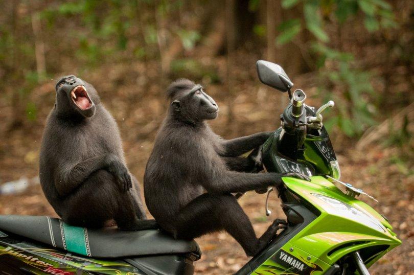 00000222 p - As fotografias profissionais mais engraçadas do mundo animal
