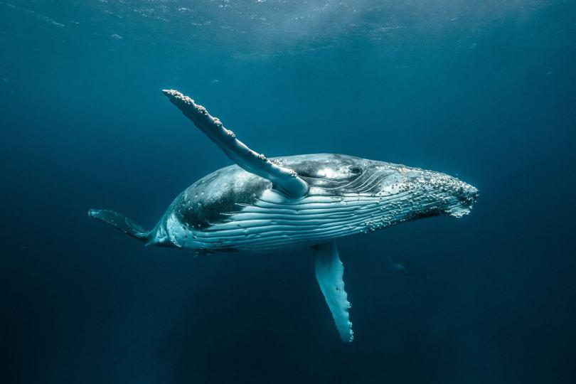 145d849e87044dd4b3eceb968c2132deea5edbbe masters 2018 wildlife03 - Vencedores dos prêmios Hasselblad de 2018 e as fotos são impressionantes