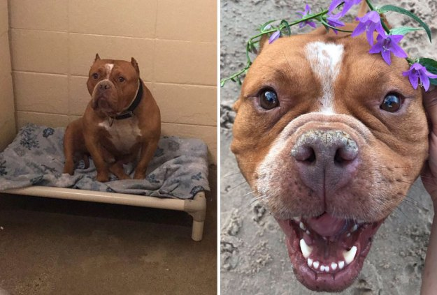 5a9682bd7284c-happy-dogs-before-after-adoption-43-5a951e57cb9ee__880 50+ Photos Show Dogs Before & After Their Adoption, And It's Hard To Believe They Are The Same Dogs Random