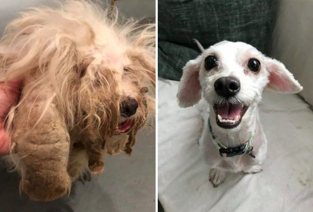 5a9682be33cd5-happy-dogs-before-after-adoption-42-5a951dd406651__880 50+ Photos Show Dogs Before & After Their Adoption, And It's Hard To Believe They Are The Same Dogs Random