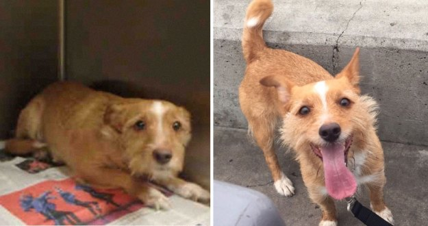 5a9682bf99880-happy-dogs-before-after-adoption-74-5a9532b337cae__880 50+ Photos Show Dogs Before & After Their Adoption, And It's Hard To Believe They Are The Same Dogs Random