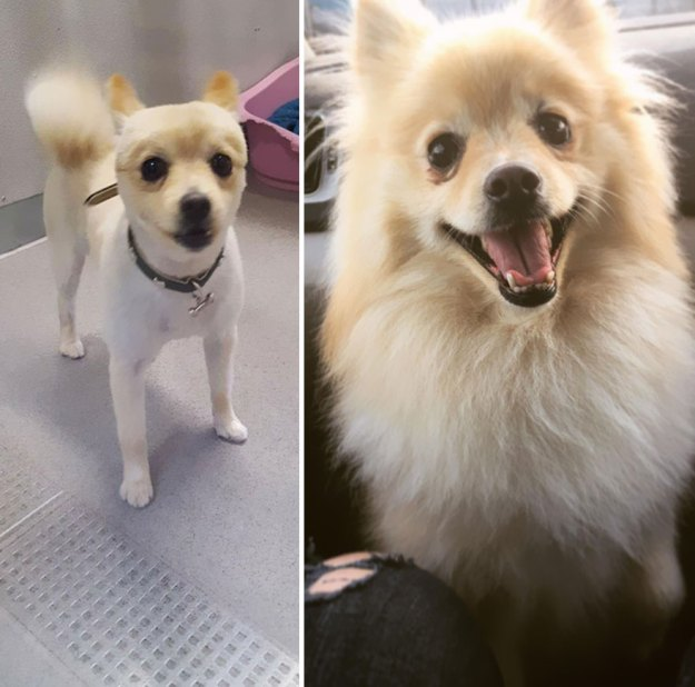 5a9682c3890db-happy-dogs-before-after-adoption-24-5a95361421c44__880 50+ Photos Show Dogs Before & After Their Adoption, And It's Hard To Believe They Are The Same Dogs Random
