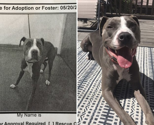 5a9682c662696-happy-dogs-before-after-adoption-13-5a950af22f23b__880 50+ Photos Show Dogs Before & After Their Adoption, And It's Hard To Believe They Are The Same Dogs Random
