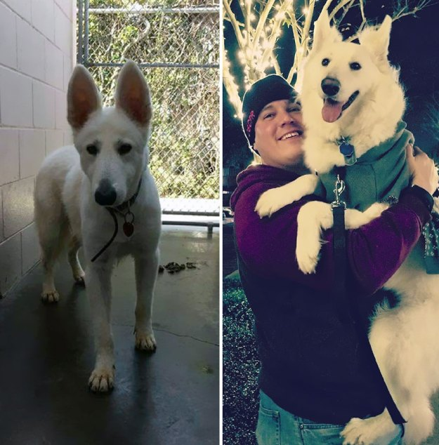 5a9682ccf3de4-happy-dogs-before-after-adoption-13-5a9536f3c216c__880 50+ Photos Show Dogs Before & After Their Adoption, And It's Hard To Believe They Are The Same Dogs Random
