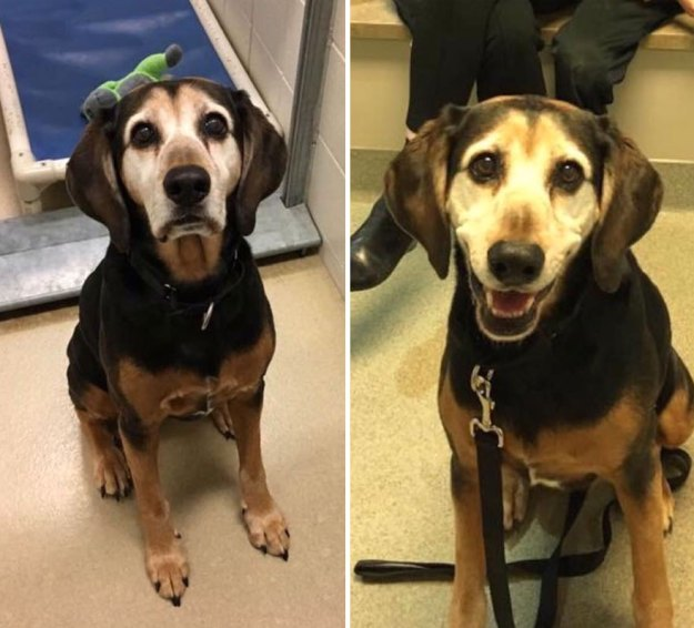 5a9682cfe854b-happy-dogs-before-after-adoption-70-5a952d4213258__880 50+ Photos Show Dogs Before & After Their Adoption, And It's Hard To Believe They Are The Same Dogs Random
