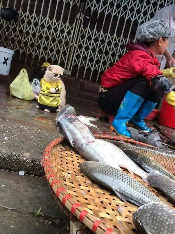 5a9fb61ab8aee-5-5a9e568d6dab9__605 Kitten Selling Fish In Vietnam Becomes The Latest Internet Sensation Random