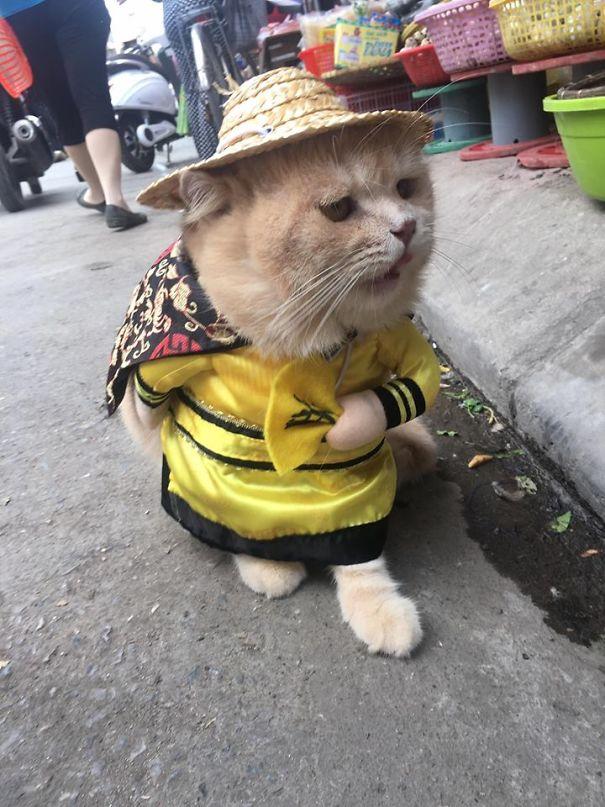 5a9fb61bb422e-10-5a9e518841443__605 Kitten Selling Fish In Vietnam Becomes The Latest Internet Sensation Random