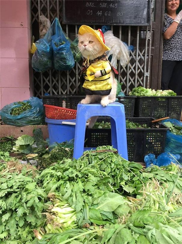 5a9fb61c65aea-20170413-041051-5_600x800-5a9e5226d4603__605 Kitten Selling Fish In Vietnam Becomes The Latest Internet Sensation Random