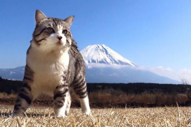 5acf652f7c30f-photogenic-cat-noraneko-nyankichi-japan-149-5acdc3787af82__700 Meet The World's Most Photogenic Cat Who Can't Get A Bad Photo Taken Of Him Random