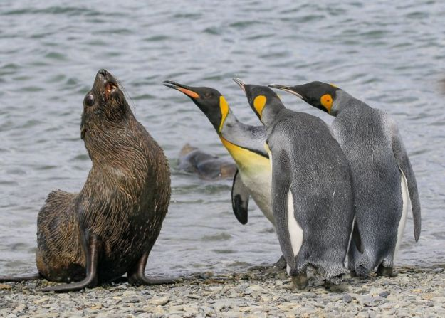 5b9f5bfae6f33-comedy-wildlife-photography-awards-finalists-2018-5-5b9b575aaa789__880 20+ Comedy Wildlife Photography Awards 2018 Finalists That Will Brighten Your Day Photography Random