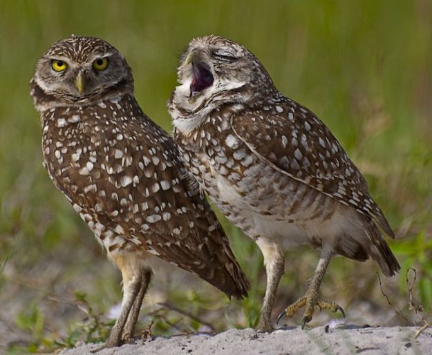 5b9f5bfc79b0d-comedy-wildlife-photography-awards-finalists-2018-4-5b9b57591e50d__880 20+ Comedy Wildlife Photography Awards 2018 Finalists That Will Brighten Your Day Photography Random
