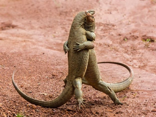 5b9f5bfd6f94f-comedy-wildlife-photography-awards-finalists-2018-10-5b9b5763bff57__880 20+ Comedy Wildlife Photography Awards 2018 Finalists That Will Brighten Your Day Photography Random