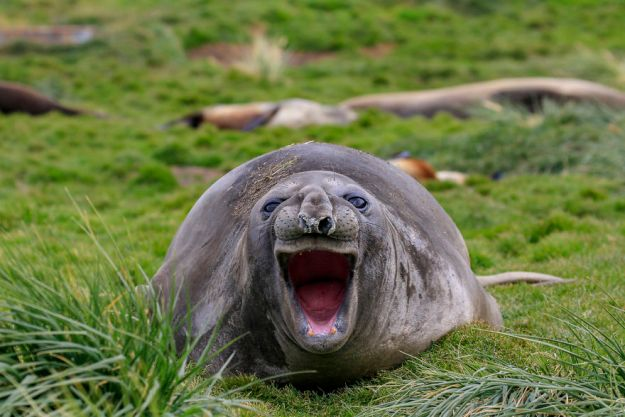 5b9f5bfee5911-comedy-wildlife-photography-awards-finalists-2018-9-5b9b57619ccce__880 20+ Comedy Wildlife Photography Awards 2018 Finalists That Will Brighten Your Day Photography Random