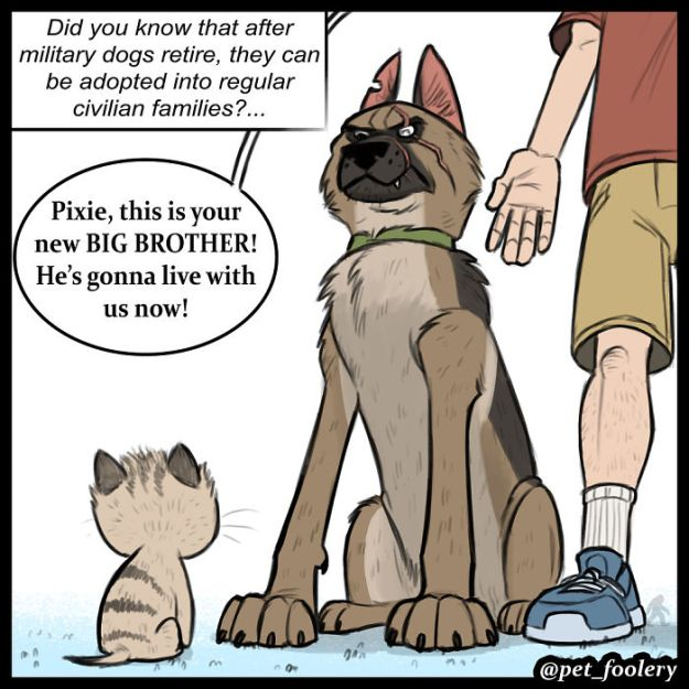 5bbb6f8cc2431-funny-animal-comics-adventures-dogs-pixie-brutus-pet-foolery-1-5bb20460270ca__700 Adorable Comics About An Old Military Dog And A Little Kitten That Will Warm Your Heart Random