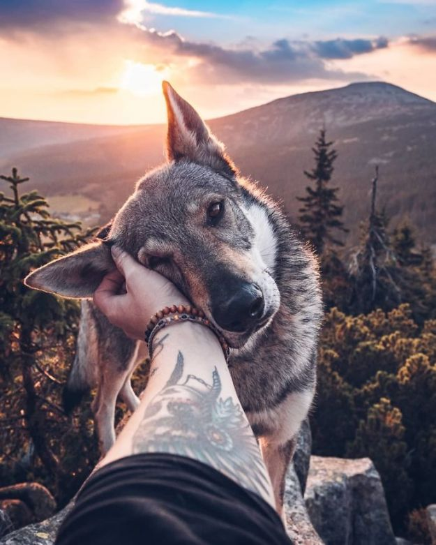 5bc58f42b4722-Bog7i8znRns-png__700 20+ Pictures Of A Guy Petting His Dog For Those Tired Of #FollowMeTo Instagram Pics Photography Random