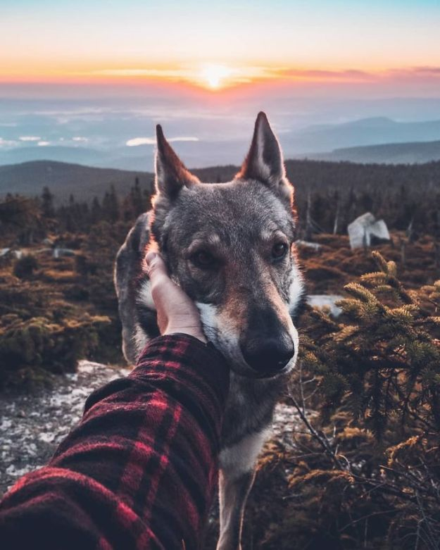 5bc58f44cf58d-BmyJnJRnhst-png__700 20+ Pictures Of A Guy Petting His Dog For Those Tired Of #FollowMeTo Instagram Pics Photography Random