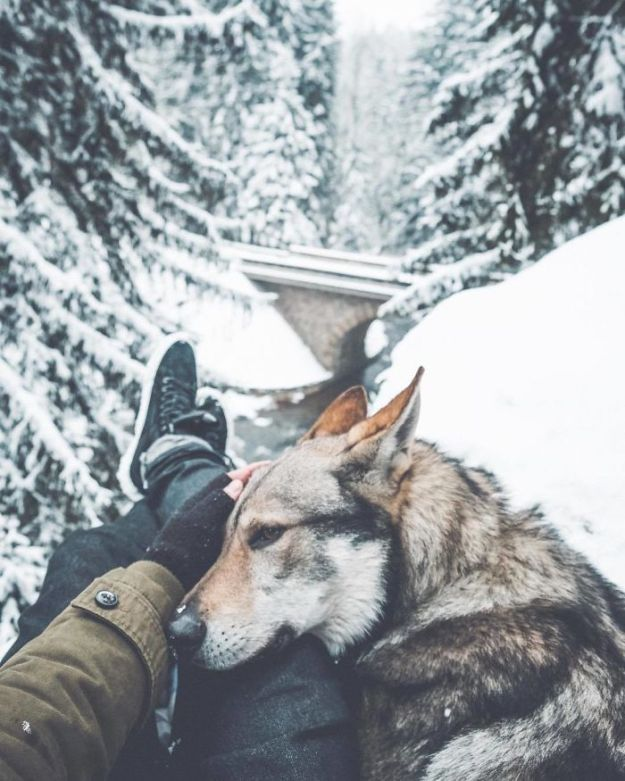 5bc58f45a9d66-BdFF19jniGr-png__700 20+ Pictures Of A Guy Petting His Dog For Those Tired Of #FollowMeTo Instagram Pics Photography Random
