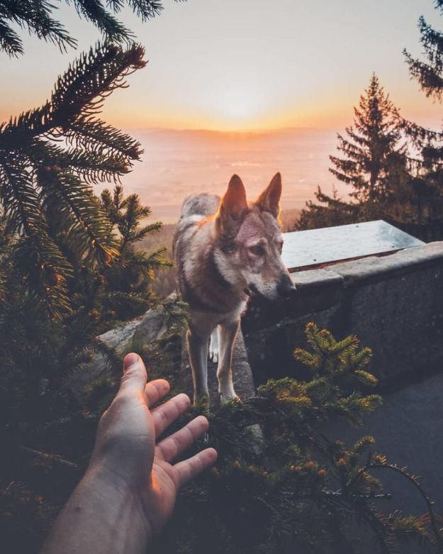 5bc58f46ed806-Bh3j3eXHisQ-png__700 20+ Pictures Of A Guy Petting His Dog For Those Tired Of #FollowMeTo Instagram Pics Photography Random