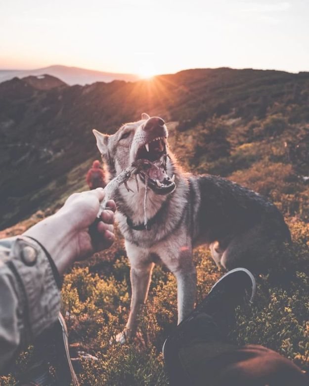 5bc58f471eeac-BibbXHznl0V-png__700 20+ Pictures Of A Guy Petting His Dog For Those Tired Of #FollowMeTo Instagram Pics Photography Random
