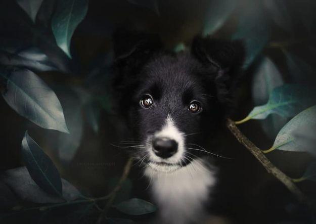 5c07def180656-BjrP-wFBzyb-png__880 50 Beautiful Photos Of Dogs Taken By Czech Photographer Kristýna Kvapilová Photography Random