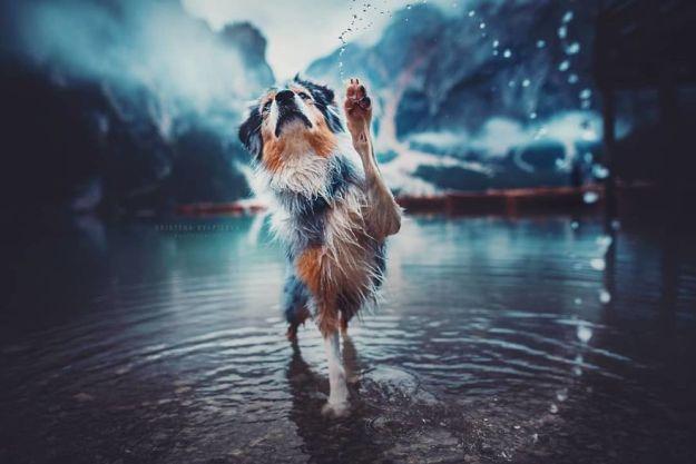 5c07def1dee29-Bn0R9J4h_1d-png__880 50 Beautiful Photos Of Dogs Taken By Czech Photographer Kristýna Kvapilová Photography Random