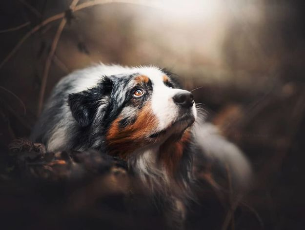 5c07def2ecfa5-Bgq8hIPAs6Z-png__880 50 Beautiful Photos Of Dogs Taken By Czech Photographer Kristýna Kvapilová Photography Random